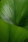 Close-up of palm leaves, Singapore - Yukmin