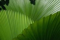 Palm leaves, Singapore - Yukmin