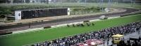 Horse racing, Shatin, Hong Kong - OTHK