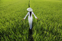 Rear view of woman wearing traditional Vietnamese outfit walking through a rice paddy - Alex Mares-Manton