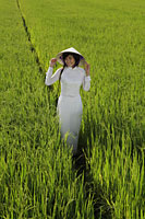 Young woman wearing traditional Vietnamese outfit standing in a rice paddy - Alex Mares-Manton
