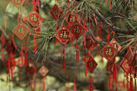 Good fortune charms hanging from a tree in Beihai Park, Beijing, China - Alex Mares-Manton