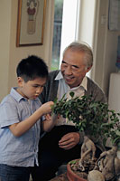 Grandfather showing his grandson how to care for a bonsai tree - Alex Mares-Manton