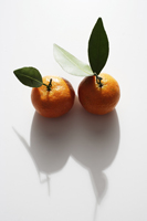 Pair of mandarin oranges - Asia Images Group