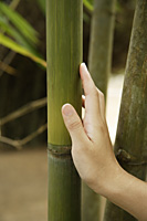 woman's hand leaning against bamboo stalk - Asia Images Group