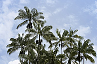 multiple palm trees with sky as background - Asia Images Group