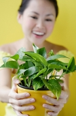 Woman holding house plant, selective focus - Asia Images Group