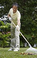 Man in garden, raking leaves - Asia Images Group