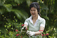 Woman pruning flowers in the garden - Asia Images Group