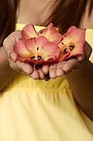 Close up of hands offering flowers - Asia Images Group