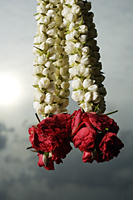 Hanging rose flower garlands - Asia Images Group