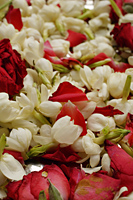 close up of rose petals - Asia Images Group
