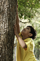 Young boy trying to climb a tree - Asia Images Group