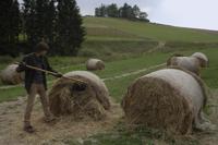 man making hay stacks - Alex Mares-Manton