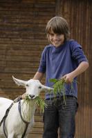 boy feeding goat - Alex Mares-Manton