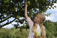 girl picking apples off tree - Alex Mares-Manton