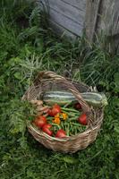 basket full of garden vegetables - Alex Mares-Manton