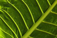 close up of leaf - Alex Mares-Manton