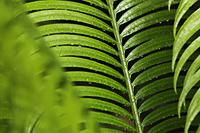 close up of rain drops of palm leaf - Alex Mares-Manton